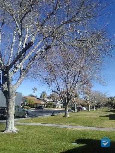 Sample Photo from the Jitterbug Flip2 Camera